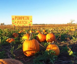 Pumpkin picking is a firm fall favorite. Photo courtesy of Keller's Farmstand