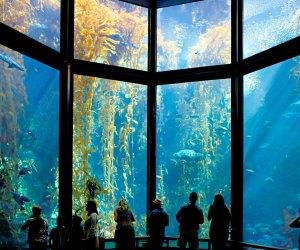 Road Trip on the PCH: The Monterey Bay Aquarium