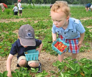 Their bright color and just-right size make strawberries a perfect u-pick fruit for kids.