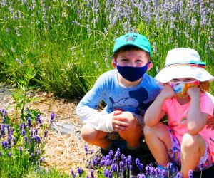 kids sitting in a field of lavender