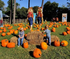 Visit 7-Acre Wood Pumpkin Patch near Houston, photo courtesy of Robin Hersey.