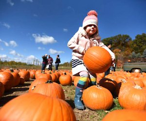 Pick the largest pumpkin you can carry at Demarest Farms.