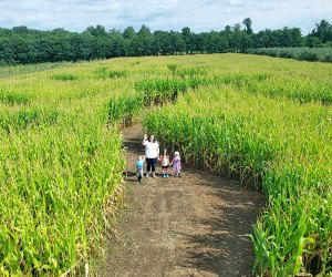 Get lost in the giant corn maze at Hurds Family Farm.