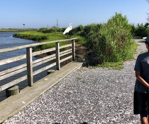 """Earl"" the Egret greets visitors during their walk around the nature area."