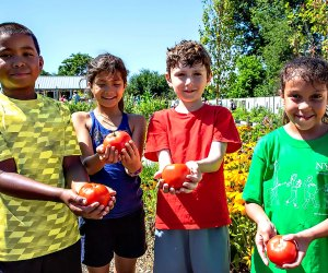 The Edible Academy at the New York Botanical Garden teaches kids how to grow and harvest veggies and fruits.