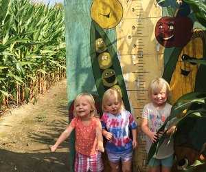 The corn maze at Samascott Orchards is open on weekends through Halloween. Photo courtesy of the orchard