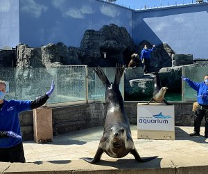 The Long Island Aquarium is a great all-seasons destination. Photo courtesy of the aquarium