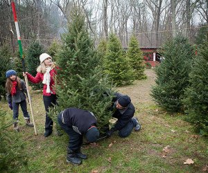 Turn your tree hunt into an ideal family adventure. Photo by MassTravel via Flickr