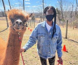 Meet Chevy at Little Lost Creek Alpaca Farm in Harleysville.. Photo by author