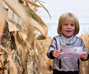 A corn maze is open in Middlefield! Photo Courtesy of Lyman Orchards