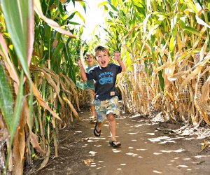 Get brains and legs working in Lyman's corn maze. Photo by Kim Tyler courtesy of Lyman Orchards