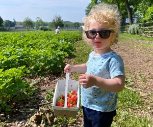 At Maple Acres Farm, it's all about the berries. Photo by Erica Velander