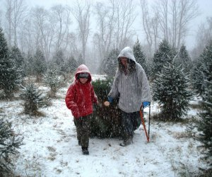 Picking your own tree straight from the field is even more fun in the snow. Photo courtesy of Maple Row Farm