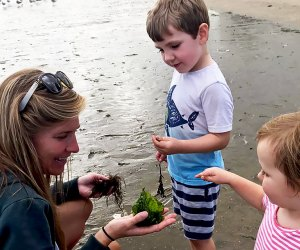 The Marine Education Center lets kids get hands-on with the Long Island Sound.Photo courtesy of the center