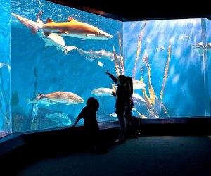 Sharks swim at the Norwalk Maritime Aquarium