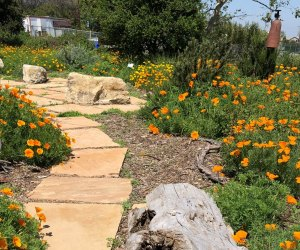 Things To Do with Kids in Manhattan Beach: Botanical Gardens