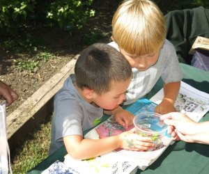 Check out crawling creatures at the 17th Annual Insect Festival at Mercer Educational Gardens. Photo by David Byers