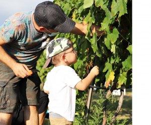 Photo courtesy of Messina Hof Winery