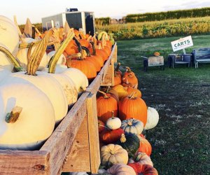 FInd your perfect pumpkin at Milk Pail.