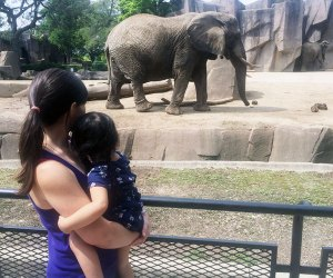 See the elephants at the Milwaukee Zoo.