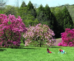 Enjoy a spring day on Magnolia Slope at Morris Arboretum. Photo courtesy of the arboretum