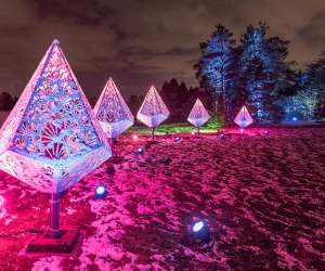 See trees in a different light at a reimagined Illumination: Tree Lights at The Morton Arboretum.
