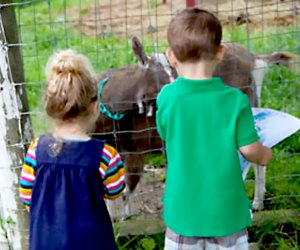 two kids at baby animals on farm Muscoot Farms Westchester affordable  summer camps