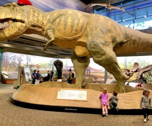 Meet the dinos at the Museum of Science.