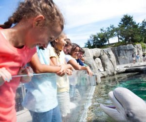 See the Beluga Whales on a summer day trip