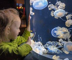 fish tanks jellyfish National Aquarium