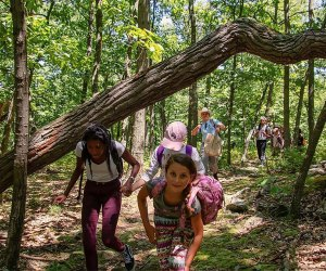 The Nature Place Day Camp is one of several that still have openings for summer 2019! Photo courtesy of the camp
