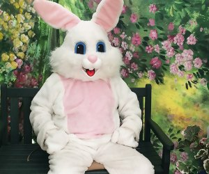 Meet the Easter Bunny at one of these fabulous locations!