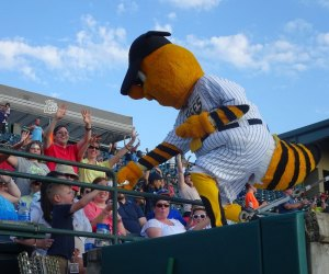 The New Britain Bees play wood-bat, collegiate ball - and have a great mascot, Sting! Photo courtesy of the team