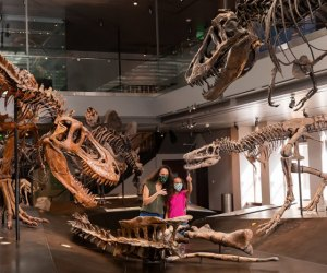 Visiting the Natural History Museum with Kids: More dinos!