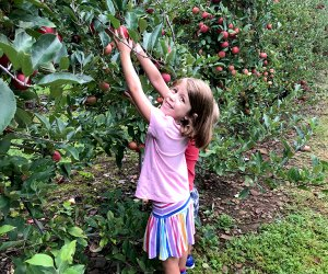 Get your apples at Alstede Farms. Photo by Rose Gordon Sala