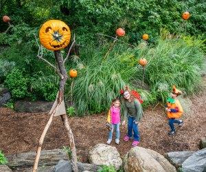 Walk the pumpkin trail at the NYBG this Halloween season