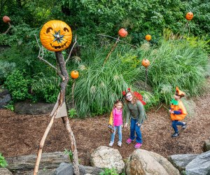 Scarecrows and pumpkins take over the New York Botanical Garden this month. It's also the last month to see the landmark Yayoi Kusama exhibition on display there. Photo courtesy of the NYBG