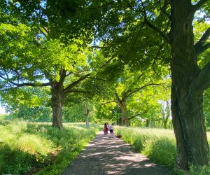 Enjoy the carriage paths at the Rockefeller State Park Preserve