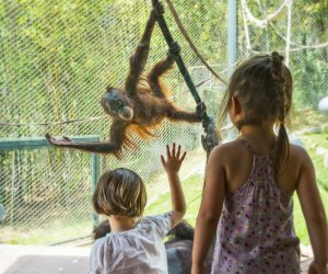 Things To Do with LA Preschoolers: The LA Zoo