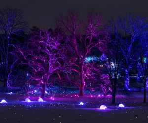 See trees in a different light at a reimagined Illumination: Tree Lights at The Morton Arboretum. Photo courtesy of the Morton Arboretum