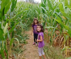 Two girls inside the Ort Farms corn maze