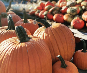 Stroll through fields packed with pumpkins at Outhouse Orchards.