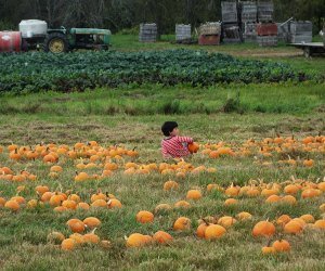 Little boy sits in pumpkin picking patch at Outhouse Orchards