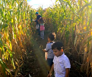 Look for clues as you make your way through the corn maze at Outhouse Orchards. Photo by Sara M.