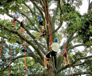 Learn some climbing skills in a Tree Climbing Class at Panola Mountain State Park. Photo courtesy of the park