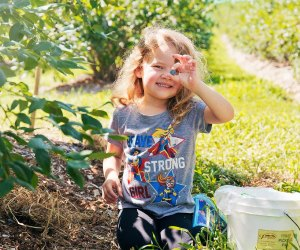 Nothing says summer like blueberry picking! Photo courtesy of Parlee Farms