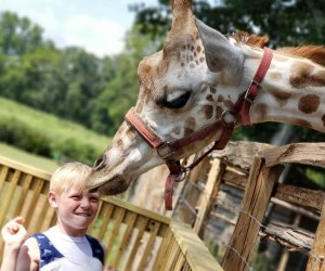 Pettit Creek Farms is home to exotic animals from around the globe.