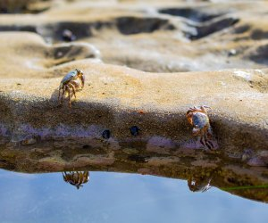 See the tiny crabs that live in the tide pools near Laguna Beach.