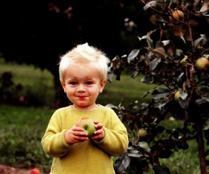 Kids of all ages enjoy apple picking. Photo by Maria Lindsey