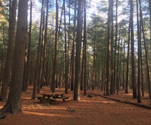 picnic tables and camping space in pine barrens